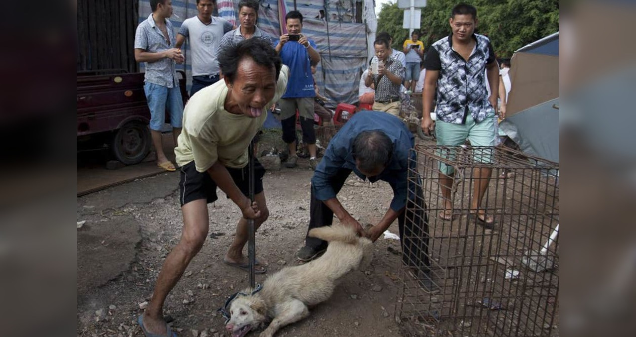 Yulin Festival China: How Dogs & Cats Are Tortured To Death