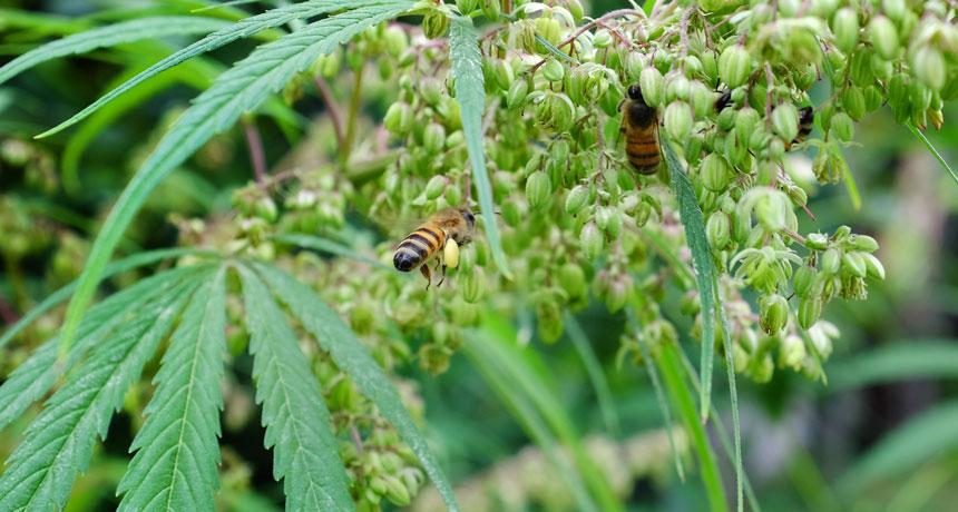 bee populations